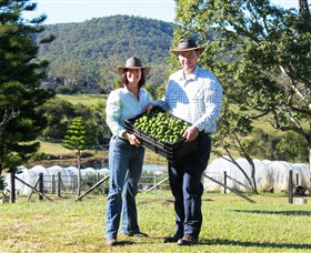 Hinterland Feijoas - Accommodation Melbourne
