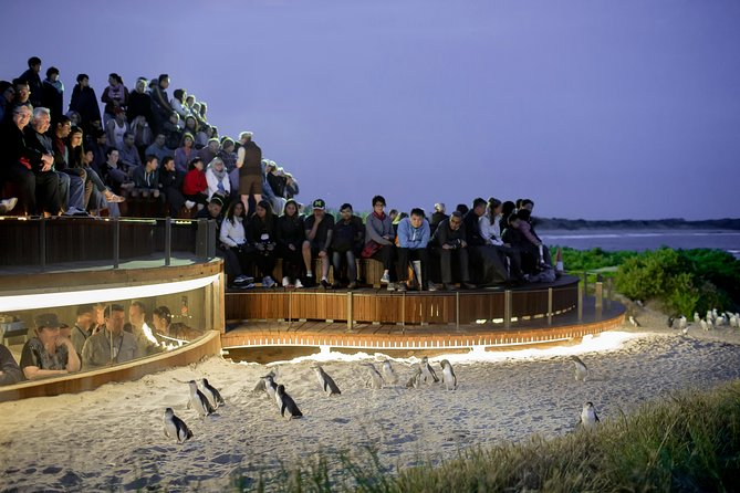 1 Day Private Phillip Island Tour VIP Charter up to 9 People